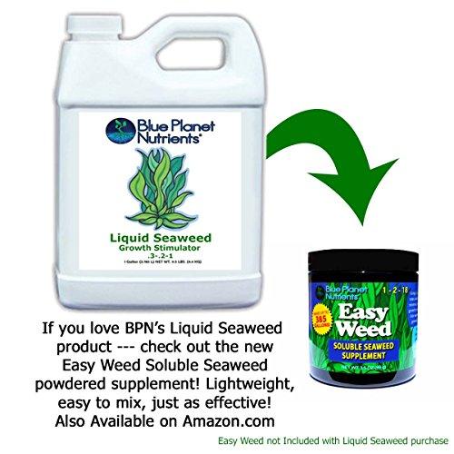 Blue Planet Nutrients Liquid Seaweed Quart (32 oz) | Liquid Kelp Supplement | Hydroponic Aeroponic Soil Coco Coir | For All Plants & Gardens