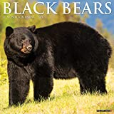Black Bears 2021 Wall Calendar