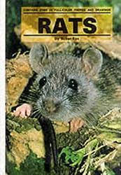 Rats (Small Animals)