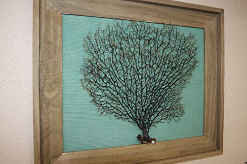 Salty Pelican Natural Sea Fan Framed Wall Art Aqua Green Textured Background, 25 1/2 inch by 21 inch Tall, SF-103 ()