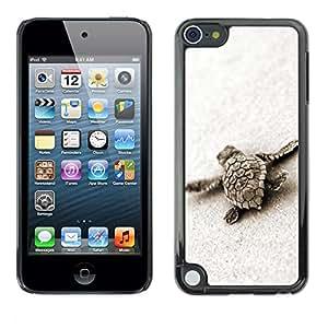 - Turtle Baby Tortoise Sand Nature Animal - - Monedero pared Design Premium cuero del tir???¡¯???€????€??????????&fno
