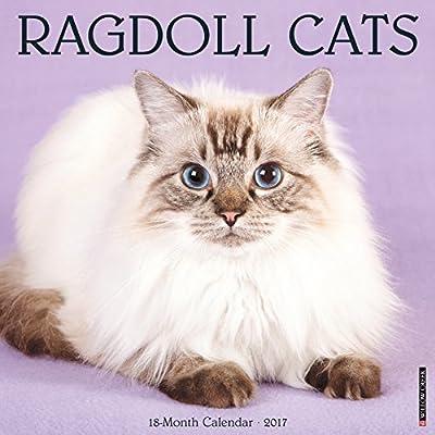 2017 Ragdoll Cats Wall Calendar