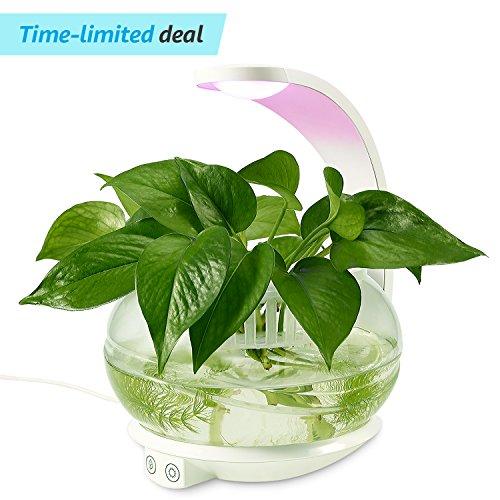 Uv Light Herb Garden in Florida - 3