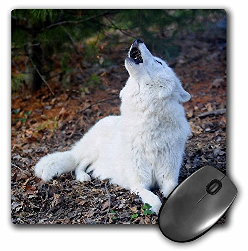 White Arctic Wolf, howling 2 - Mouse Pad, 8 by 8 inches (mp_124322_1) (Arctic Rests Wolf)