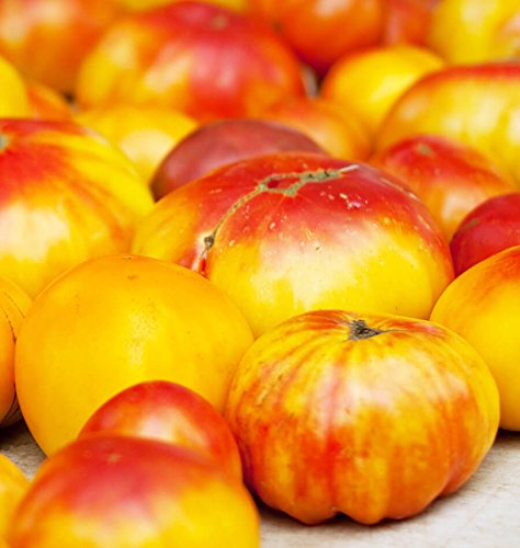 Old German Tomato Seeds Non-GMO (Variety Size Available) (800 Seeds) ()