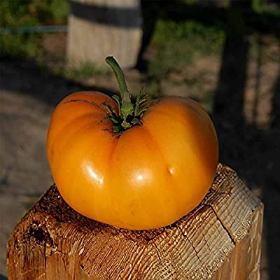 Tomato Garden Seeds - Golden Queen - Non-GMO, Organic, Heirloom, Vegetable Gardening Seed