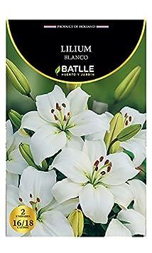 Bulbos - Lilium blanco - Batlle Semillas Batlle 076602bols