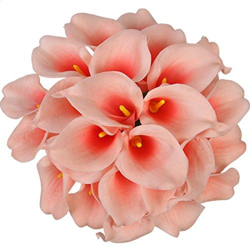 Coral Color Flowers: Amazon.com