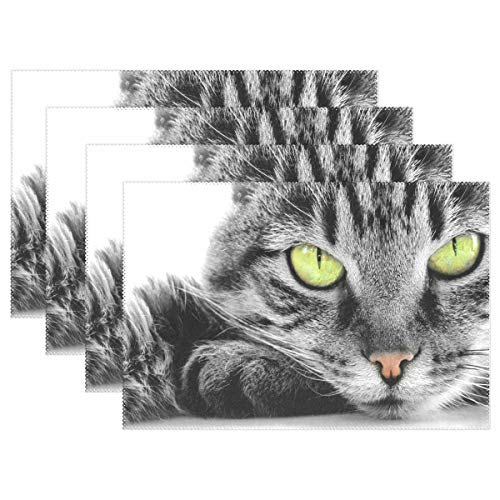 - Fengye Placemats American Shorthair Cat Kitchen Table Mats Resistant Heat Placemat for Dining Table Washable 12