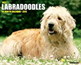 Just Labradoodles 2015 Wall Calendar