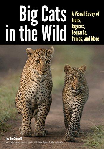 Cat Big Art - Big Cats in The Wild: A Visual Essay of Lions, Jaguars, Leopards, Pumas, and More