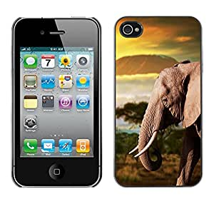 iBinBang / Funda Carcasa Cover Skin Case - Tronco del elefante de África montañas Llanura - Apple iPhone 4 / 4S