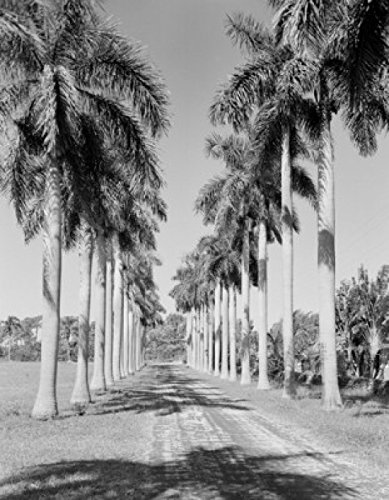 amazon com usa florida road lined with royal palm trees poster