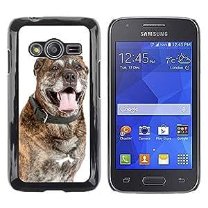 Super Stella Slim PC Hard Case Cover Skin Armor Shell Protection // M00104269 Dog Dogs Portrait // Samsung Galaxy Ace4 / Galaxy Ace 4 LTE / SM-G313F
