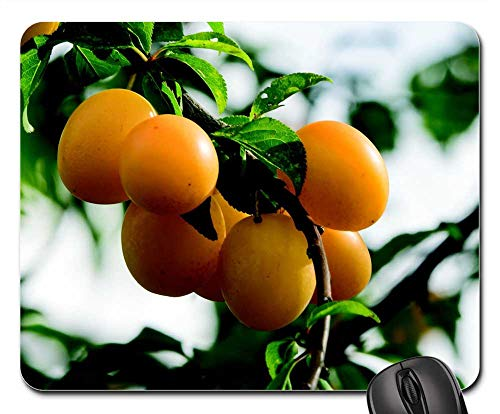 (Mouse Pad - Plums Fruit Greengage Mirabelle Beadle Fruit)