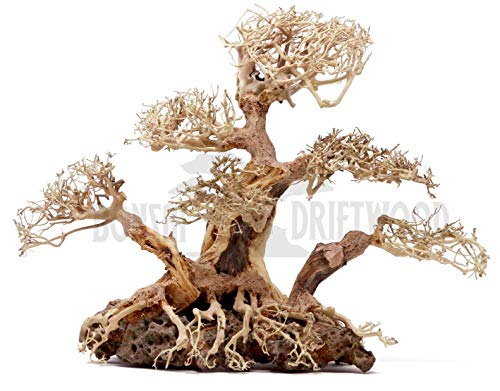 Bonsai Driftwood Aquarium Tree BLS (12 Inch Height x 9 Inch Width x 16 Inch Length) Natural, Handcrafted Fish Tank Decoration | Helps Balance Water pH Levels, Stabilizes Environments | Easy to Install ()