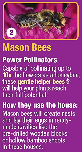 Nature's Way Bird Products CWH7 Better Gardens Beneficial Insect House, 4 Chamber by Nature's Way Bird Products (Image #8)