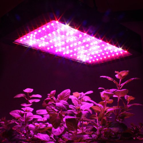Apollo Horticulture Full Spectrum 600 Watt LED Grow Light