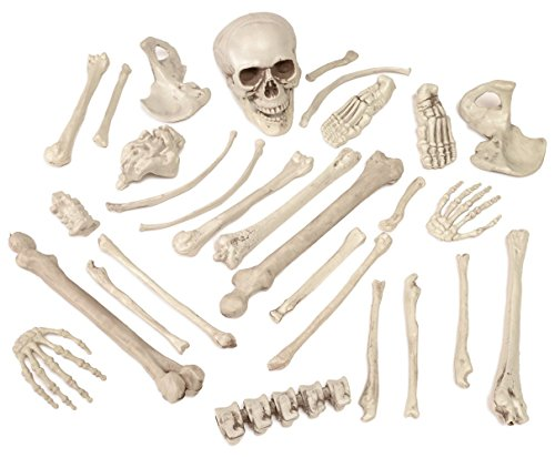perfect for halloween decor or halloween decorations great for science class or classroom - Halloween Decorations Skeleton