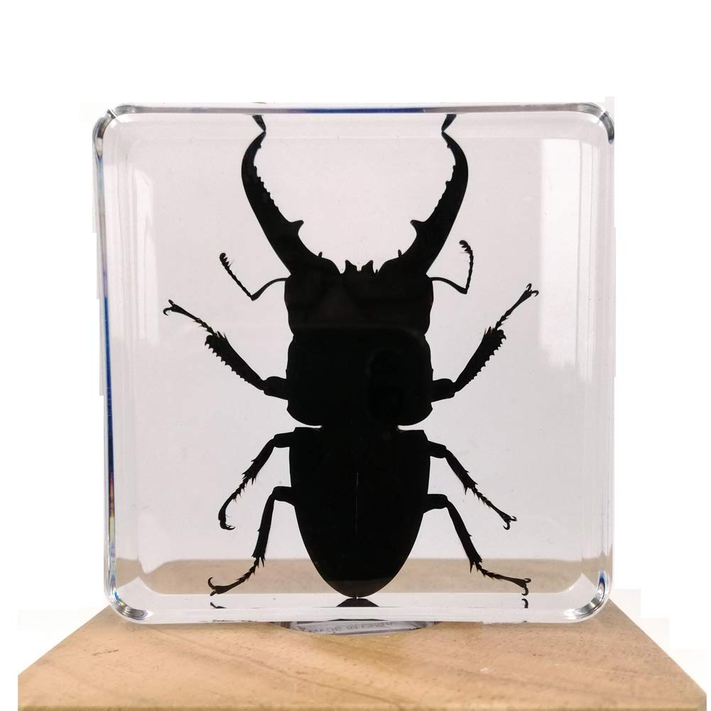 Insect Specimen Resin Paperweight Biology Anatomy Education Teaching Tool Educational Toy Black Scorpion