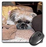 Best 3dRose Computer Pads - 3dRose Jos Fauxtographee- Shih Tzu Baby in Sweater Review