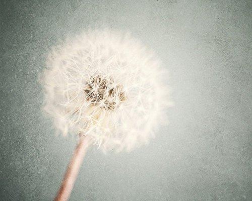 'Dreamy Dandelion' - Shabby Chic Flower Art Print for Girl's Room Decor in Cream Slate Blue Grey. Unisex Nursery Decor.]()