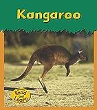 Kangaroo (Zoo Animals) offers
