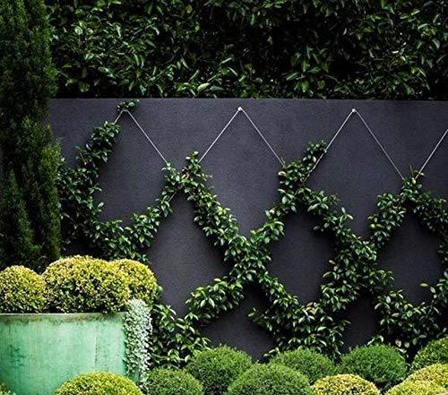 Tumax 50-Piece Plant Anchors For Trellis Design and Vine ...