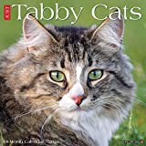 Just Tabby Cats 2021 Wall Calendar
