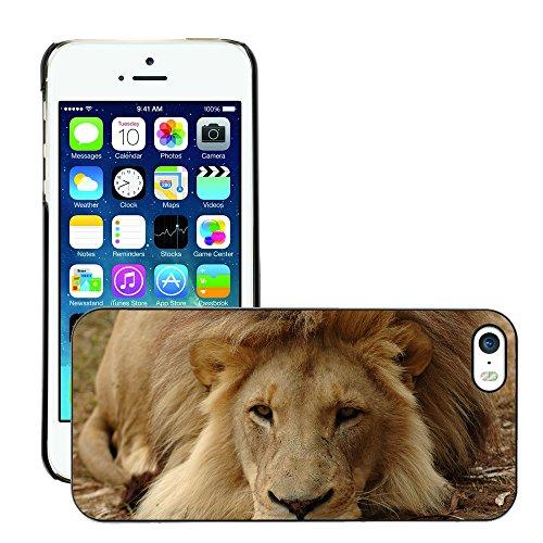 Premio Sottile Slim Cassa Custodia Case Cover Shell // V00002134 Lion // Apple iPhone 5 5S 5G