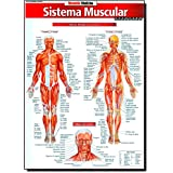 Sistema Muscular. Avançado