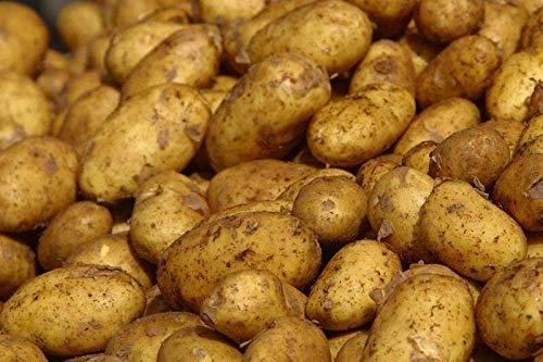 GEOPONICS Los tubérculos de patata h - Una elección excelente ...