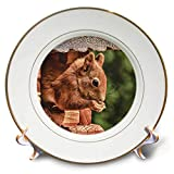 3dRose Sven Herkenrath Animal - Eating Squirrel Sitting in a House Mammal Forest Animal - 8 inch Porcelain Plate (cp_294952_1)