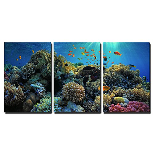 (wall26 - 3 Piece Canvas Wall Art - Beautiful View of Sea Life - Modern Home Decor Stretched and Framed Ready to Hang - 16
