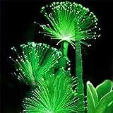 Rosepoem 100 Unids Esmeralda Semillas de Flores Fluorescentes Cuidado Fácil Plantando Plantas Caseras Perennes