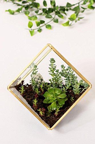 Ling's moment Glass Geometric Terrarium for DIY Garden Project, Copper Vase Decoration with Succulent Plants (Gold Terrarium)