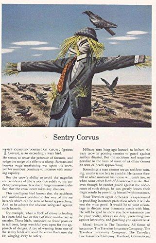 1942 Travelers Insurance: Sentry Corvus, Travelers Insurance Print Ad
