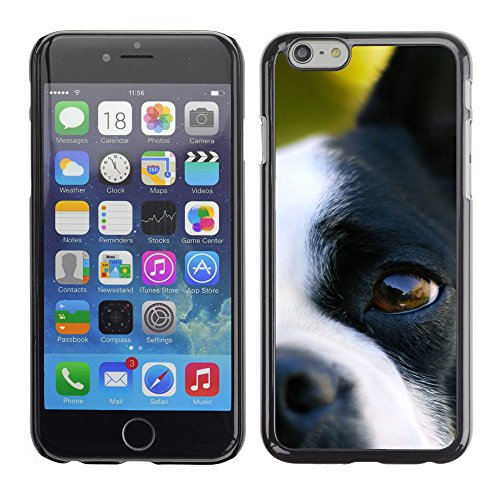 Premio Sottile Slim Cassa Custodia Case Cover Shell // V00003249 chien // Apple iPhone 6 6S 6G PLUS 5.5""