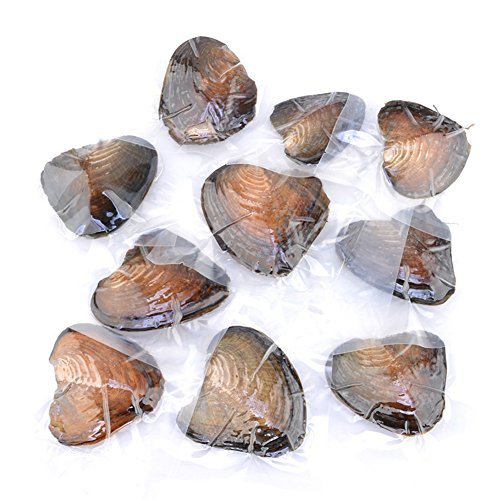 10 Pcs Freshwater Cultured Pearl Oyster Oval Beads With White/Pink/Purple, Birthday Gifts(7-8mm)