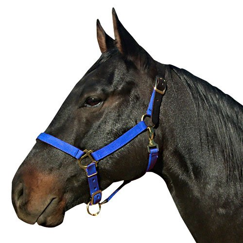 bluee Small bluee Small Intrepid International Leather Crown Halter