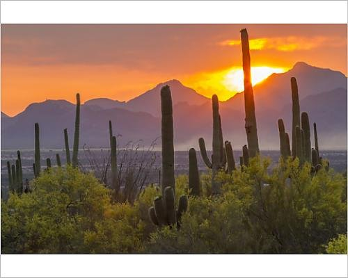10x8 Print of USA, Arizona, Saguaro National Park. Sunset on desert landscape (12630051) Sonoran Desert Saguaro National Park