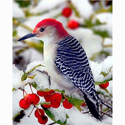 5D Diy Diamond Painting Kits - Red Berry Bird?Full Drill Rhinestone Embroidery Cross Stitch Painting For Christmas Home Decor(Frameless) ()