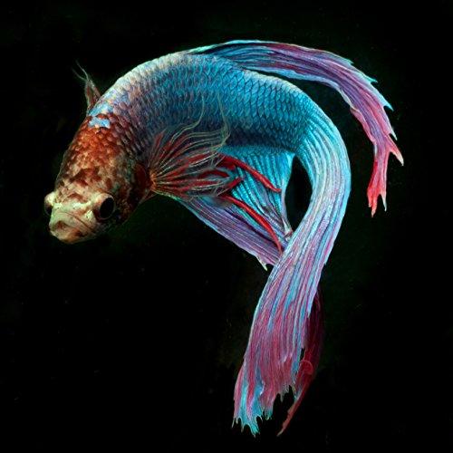 Aqua Beeta 1