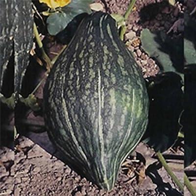 Green Hubbard Winter Squash Garden Seeds - Non-GMO, Heirloom - Vegetable Gardening Seed
