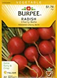 buy Burpee 64592 Radish Cherry Belle Seed Packet now, new 2018-2017 bestseller, review and Photo, best price $4.99