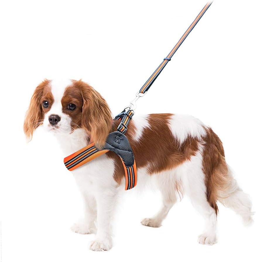 Namsan Pettorina per Cani con guinzaglio Confortevole Regolabile Cintura per Cani No Pull Cani Set Dog Harness Perfetto per la Corsa Quotidiana Passeggiate Allenamento.