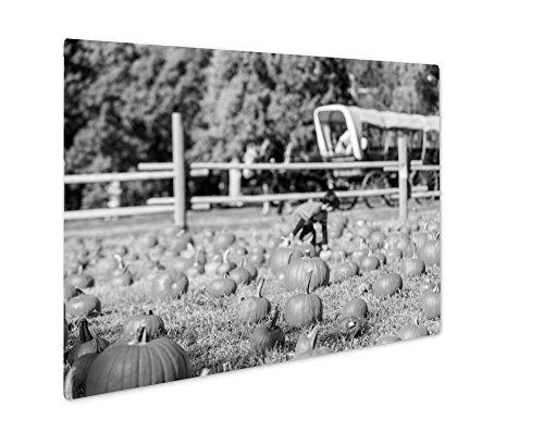 Ashley Giclee Pumpkin Patch, Wall Art Photo Print On Metal Panel, Black & White, 24x30, Floating Frame, AG6121543 -