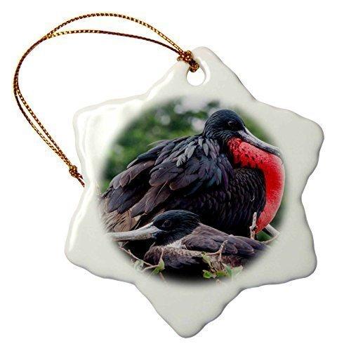 Valentine Herty Christmas Ceramic Ornament Isla De Plata Ecuador Nesting Frigate Bird ()