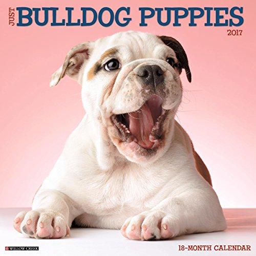 Bulldog Puppies 2017 Wall Calendar product image