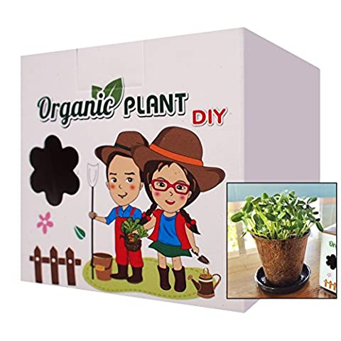 Baby Fun & Development Organic Planting Gardening Experiment Kit Sunflower Plant for Kids - River Rock Centerpieces
